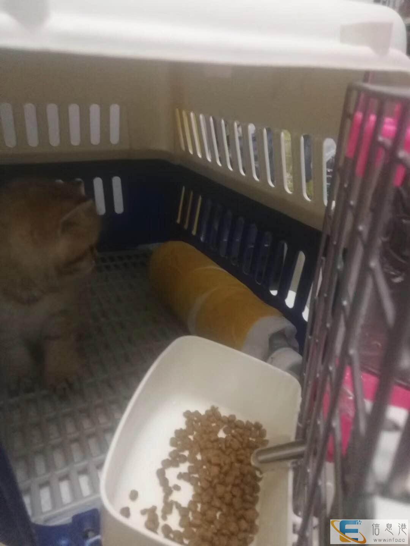 泰安宠物检疫证办理上门服务