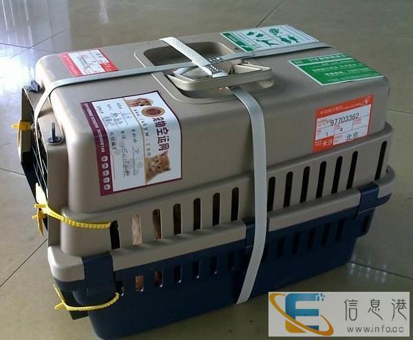 山东泰安宠物航空托运专车接送全国连锁